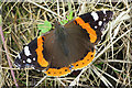 NJ3351 : Red Admiral Butterfly (Vanessa atalanta) by Anne Burgess