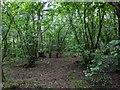 TF0820 : A small grove by Bob Harvey
