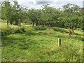 NT2469 : Cherry avenue, Braidburn Valley Park by Richard Webb