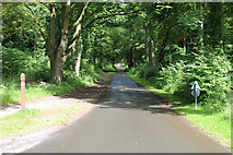 NS2209 : Piper's Brae, Culzean Country Park by Billy McCrorie