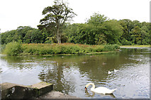 NS2209 : Island at the Swan Pond, Culzean Country Park by Billy McCrorie