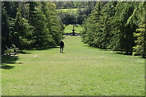TQ6039 : Cedar Avenue, Dunorlan Park by N Chadwick