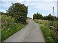 SE0715 : Moor Side Lane and an elder tree, Slaithwaite by Humphrey Bolton