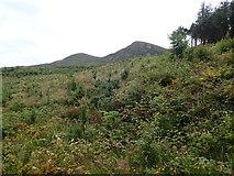 J3630 : Nursery plantation in Donard Wood by Eric Jones