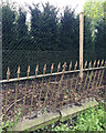 SP2964 : Preparations for replacing an old fence, Myton Road, Warwick by Robin Stott