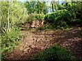 SJ6930 : Landslip in Woodseaves Cutting, Shropshire by Roger  Kidd