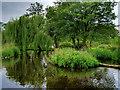 SD4214 : WWT Martin Mere Wetland Centre by David Dixon
