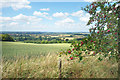 SU2886 : View from Knighton Hill with Apples by Des Blenkinsopp