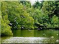 SD8303 : Heaton Park Boating Lake by David Dixon