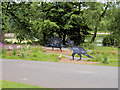 SD8511 : Dinosaurs at Queen's Park by David Dixon