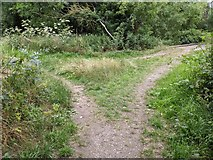 TQ5571 : Junction between paths by Paul Williams