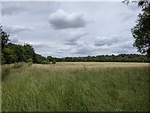 TQ5571 : Grass field next to the Darent Valley Path and M25 by Paul Williams