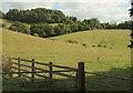 SX9491 : Slopes of Pyne's Hill by Derek Harper