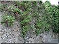 T2473 : Arklow Castle Wall, Arklow, Wicklow by Garry Dickinson