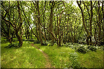 NH5857 : Path through Easter Oak Wood, Black Isle by Julian Paren