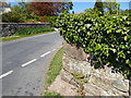 NY3348 : Wall corner and ivy, East Curthwaite by Adrian Taylor