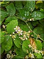 TF0820 : Variety in the Bramble flowers by Bob Harvey