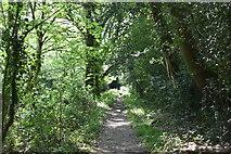 TQ5937 : Footpath to Benhall Mill Rd by N Chadwick