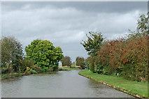 SJ6541 : Canal near Coxbank in Cheshire by Roger  Kidd