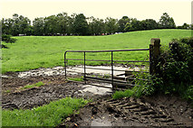 H4277 : Muddy entrance to field, Tattraconnaghty by Kenneth  Allen