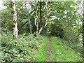 SE2200 : Path on the disused Langsett Reservoir railway line by Humphrey Bolton
