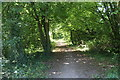ST3485 : Celtic Trail in woodland by M J Roscoe