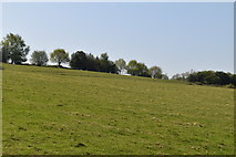 TQ5836 : Sloping pasture by N Chadwick