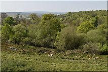 TQ5835 : Eridge Park by N Chadwick