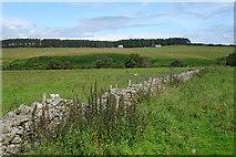 NJ1149 : Field Dyke by Anne Burgess