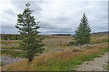 NJ0748 : Reprieved Trees by Anne Burgess