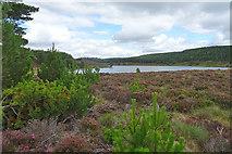 NJ0847 : Looking towards Loch Dallas by Anne Burgess