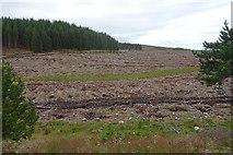 NJ0946 : Felled Plantation by Anne Burgess
