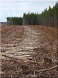 NJ1147 : Logs by Anne Burgess
