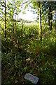 "TM4066 : Coronavirus epidemic: a ""shrine"" in Yoxford Wood by Christopher Hilton"