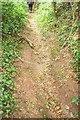 SX9169 : Track to Lower Gabwell by Derek Harper