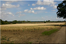 TL6829 : Open country east of Great Bardfield by David Kemp