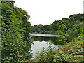SJ8255 : Fish pond at Lawton Hall by Stephen Craven