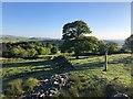 SJ9578 : Gritstone Trail by Philip Cornwall
