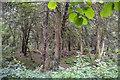 ST7765 : Bathampton : Bathampton Wood by Lewis Clarke