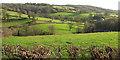 ST7469 : Valley at Ashcombe by Derek Harper