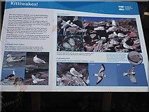 NT6779 : Kittiwakes Information Board Dunbar Harbour by Jennifer Petrie