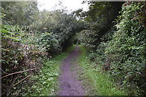 TQ5567 : Darent Valley Path by N Chadwick