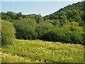 SE8290 : Levisham Wood by Graham Hogg