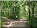 SE7889 : Path junction on the Cawthorn Roman Camps trail by Graham Hogg