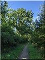 TF0820 : Trees under a morning sky by Bob Harvey