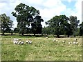 NT9502 : Field with sheep at Holystone by Oliver Dixon