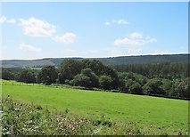 SE6091 : Improved land at Hazel Green by Gordon Hatton
