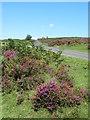 SE6091 : Moor road at Hazel Green by Gordon Hatton