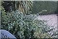 TF0820 : Garden plant by Bob Harvey