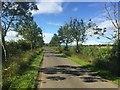 NT5884 : Diseased ashes near Blackdykes by Richard Webb